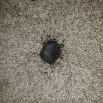 Burnt old track lighting low voltage carpet